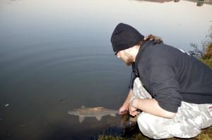Beim Zurücksetzen den Fisch so lange stabilisieren wie er zum Erholen braucht.
