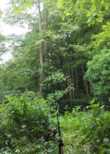 Angeln im Wald. Zugewachsene Stellen bringen oft dicke Fische.
