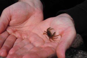 Krabben, Garnelen und Seesterne tummelten sich zwischen den Felsen