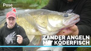 Erfolgreich Zander angeln mit Pose