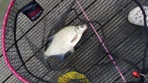 Die Brasse war dann der größte Fische des Urlaubs... für die Frau