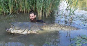 Der Fisch war 780 cm lang - in Männerzentimetern.