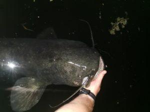 Das Gewässer beherbergt viele kleinere Fische. Wer erfolgreich um diese herumangelt kommt an die wirklich Dicken.